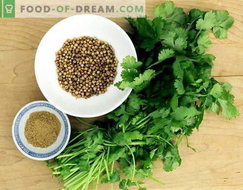 Кориандър - описание, свойства, употреба при готвене. Рецепти с кориандър.