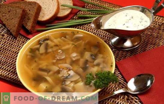 Гъбена супа в бавен котлон - за тези, които ценят вкусна храна. Готвене на бързи, задоволителни и вкусни гъбени супи в бавен котлон без караница