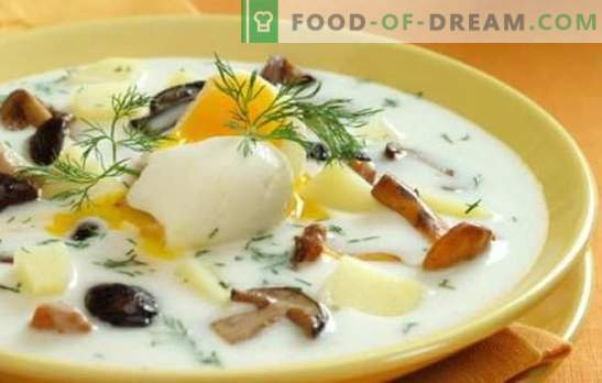 Гъбена супа - проста и полезна! Най-лесните рецепти за супа, приготвена от гъби: с месо, зърнени храни, саксии, кисели краставички и смеси
