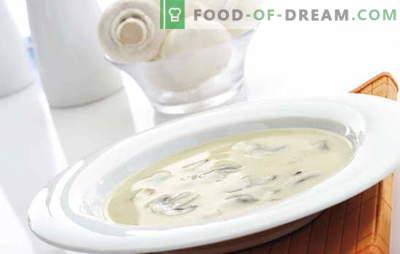 La zuppa alla crema di champignon è un piatto difficile ma economico per tutti i gusti. Zuppa di crema di funghi con diverse varianti della base