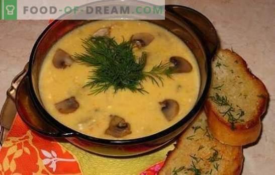 Сирена супа с гъби - нежно, вкусно, удовлетворяващо. Рецепти на най-добрите сирни супи с гъби и пиле, зеленчуци и пушени меса